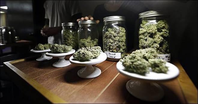 Organic cannabis plantations proposed in Chiapas WhatsApp Image 2021 04 17 at 2.34.55 PM 3